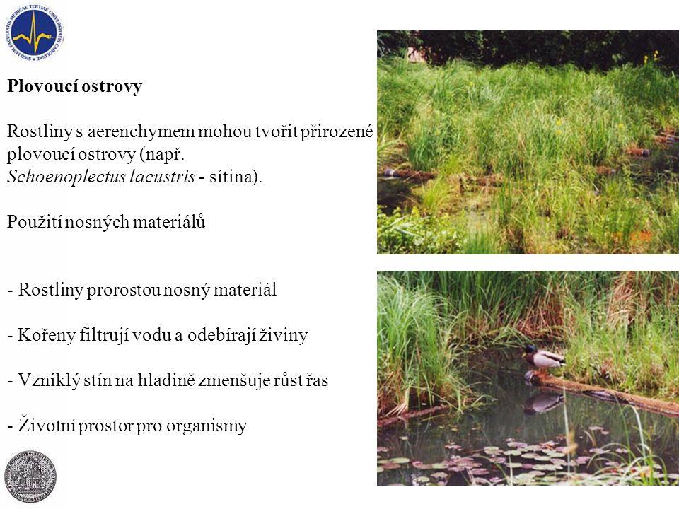 Plovoucí ostrovy Rostliny s aerenchymem mohou tvořit přirozené plovoucí ostrovy (např. Schoenoplectus lacustris - sítina).