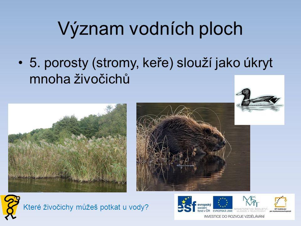 Význam vodních ploch 5. porosty (stromy, keře) slouží jako úkryt mnoha živočichů.