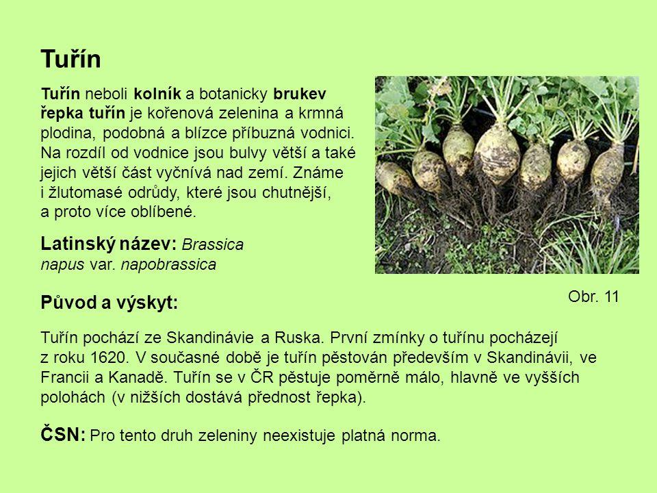 Tuřín Latinský název: Brassica napus var. napobrassica Původ a výskyt: