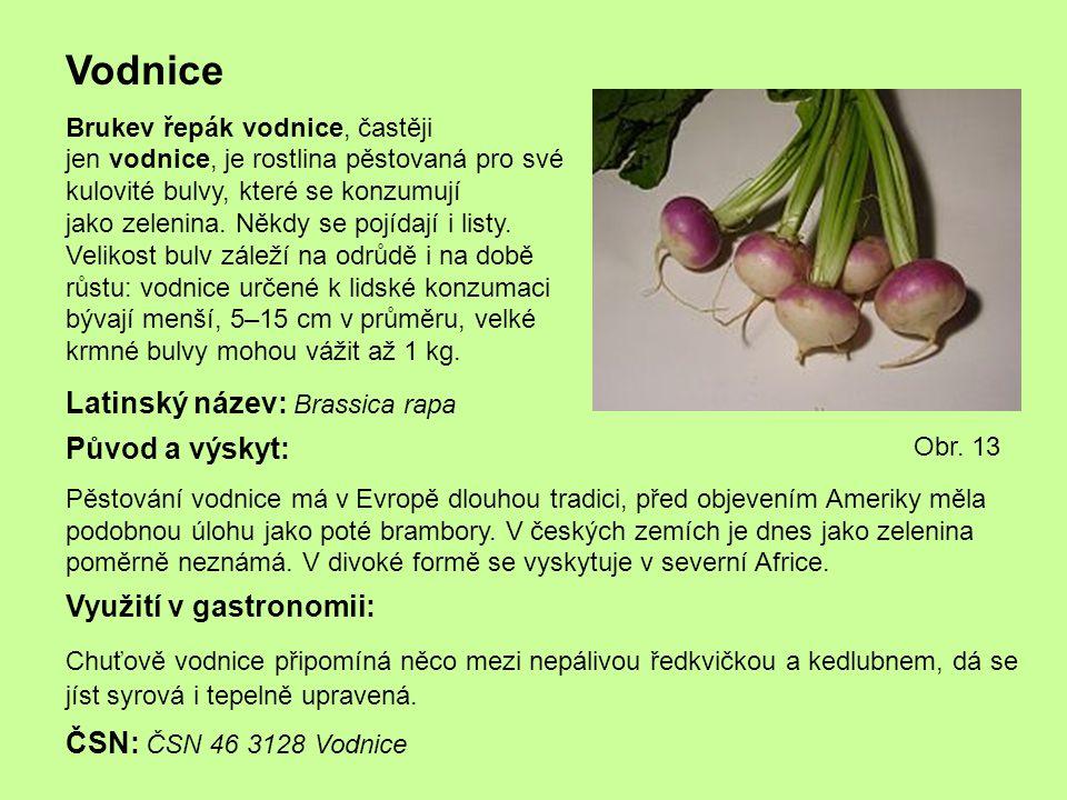 Vodnice Latinský název: Brassica rapa Původ a výskyt: