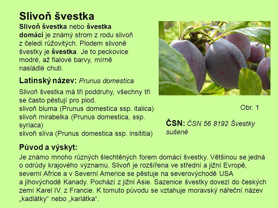 Slivoň švestka Latinský název: Prunus domestica