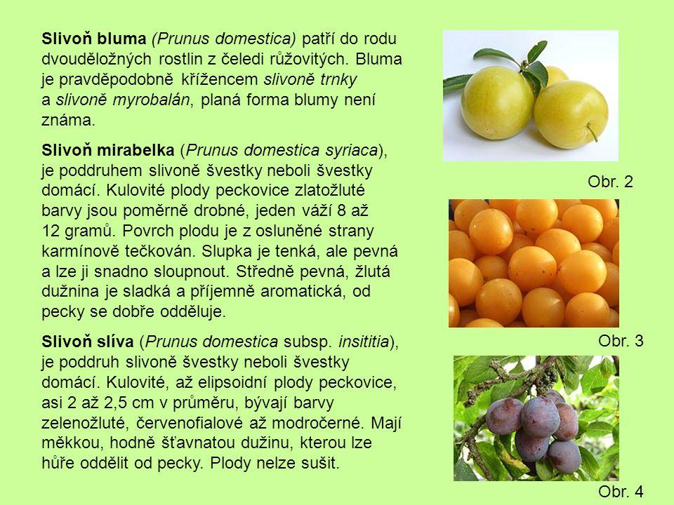 Slivoň bluma (Prunus domestica) patří do rodu dvouděložných rostlin z čeledi růžovitých. Bluma je pravděpodobně křížencem slivoně trnky a slivoně myrobalán, planá forma blumy není známa.