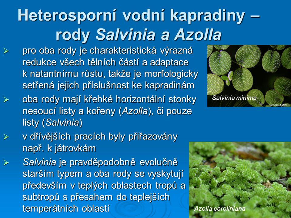 Heterosporní vodní kapradiny – rody Salvinia a Azolla