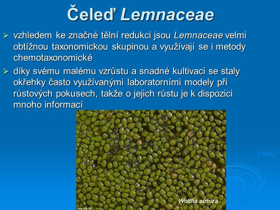 Čeleď Lemnaceae vzhledem ke značné tělní redukci jsou Lemnaceae velmi obtížnou taxonomickou skupinou a využívají se i metody chemotaxonomické.