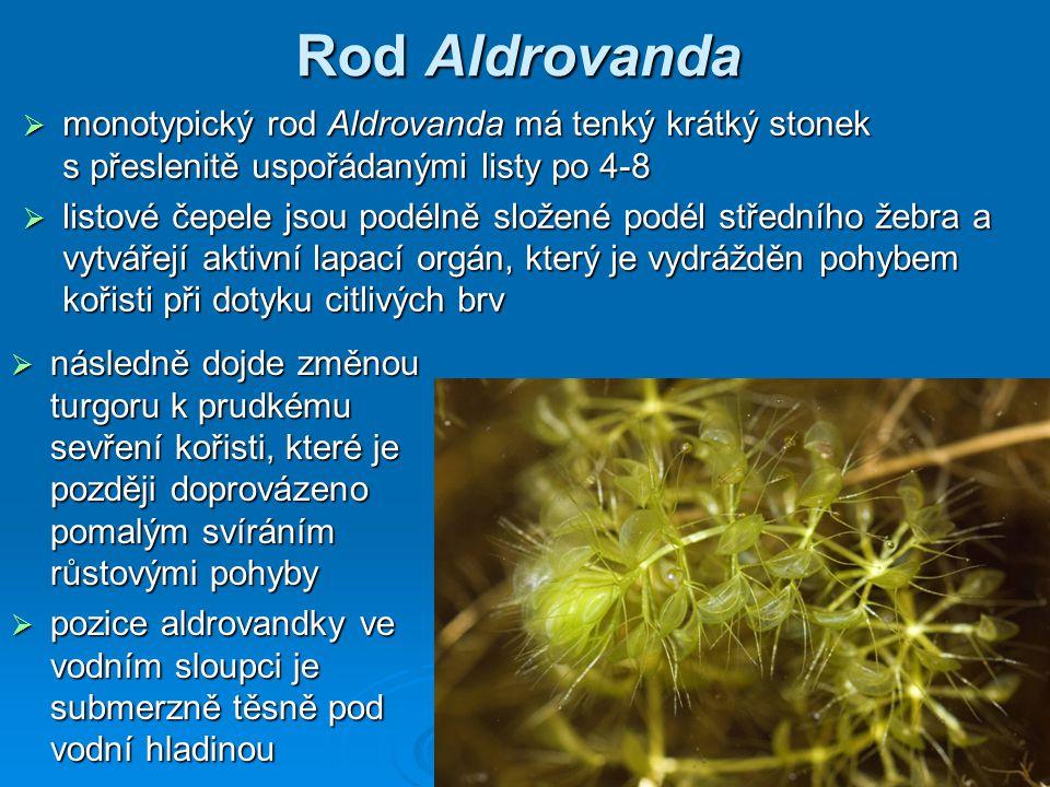 Rod Aldrovanda monotypický rod Aldrovanda má tenký krátký stonek s přeslenitě uspořádanými listy po 4-8.