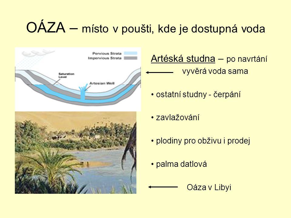 OÁZA – místo v poušti, kde je dostupná voda