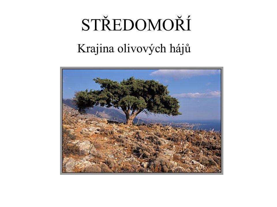 Krajina olivových hájů