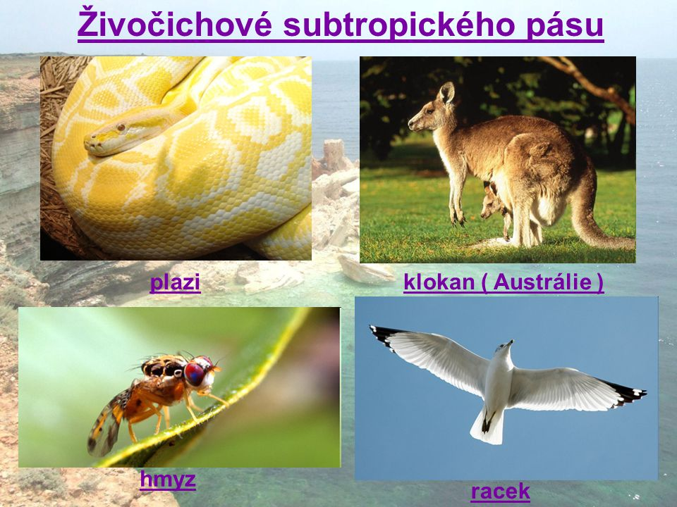 Živočichové subtropického pásu