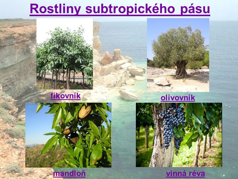 Rostliny subtropického pásu