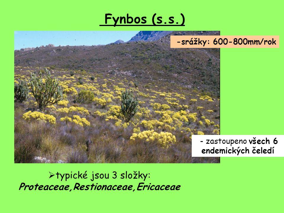 Fynbos (s.s.) typické jsou 3 složky: Proteaceae,Restionaceae,Ericaceae