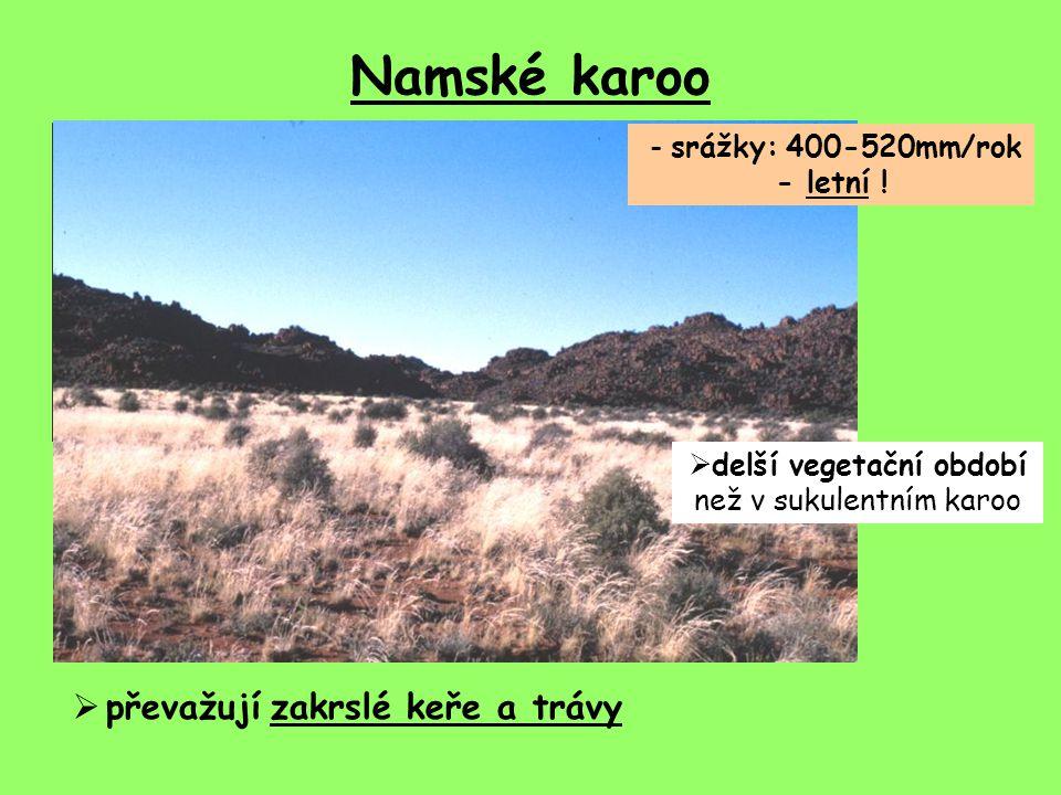 Namské karoo převažují zakrslé keře a trávy