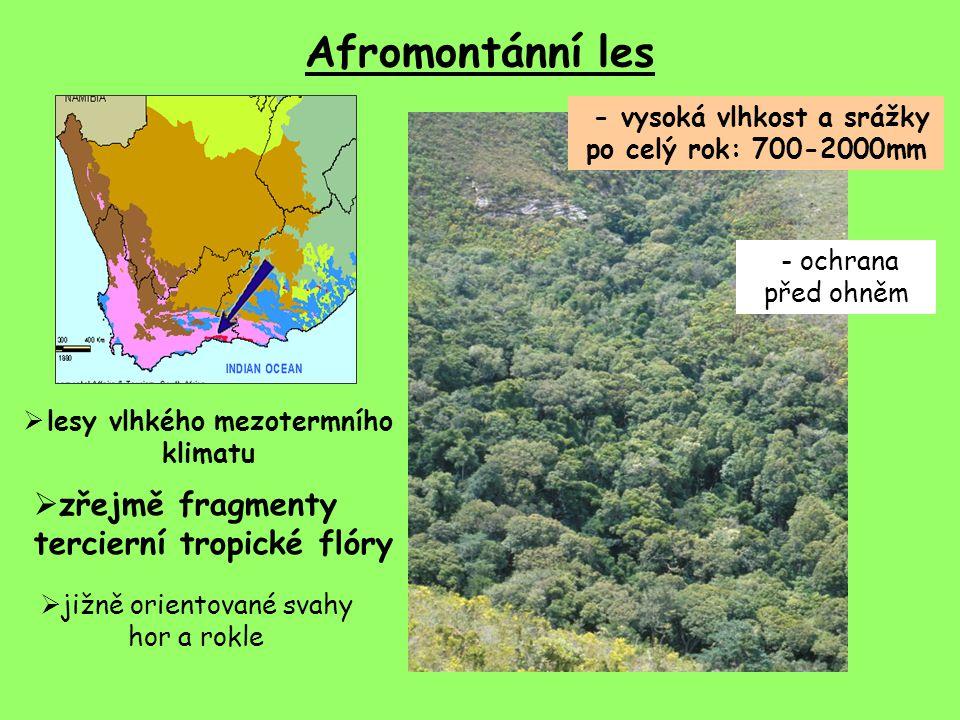 Afromontánní les zřejmě fragmenty tercierní tropické flóry