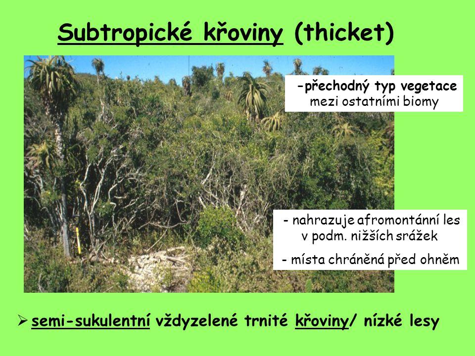 Subtropické křoviny (thicket)