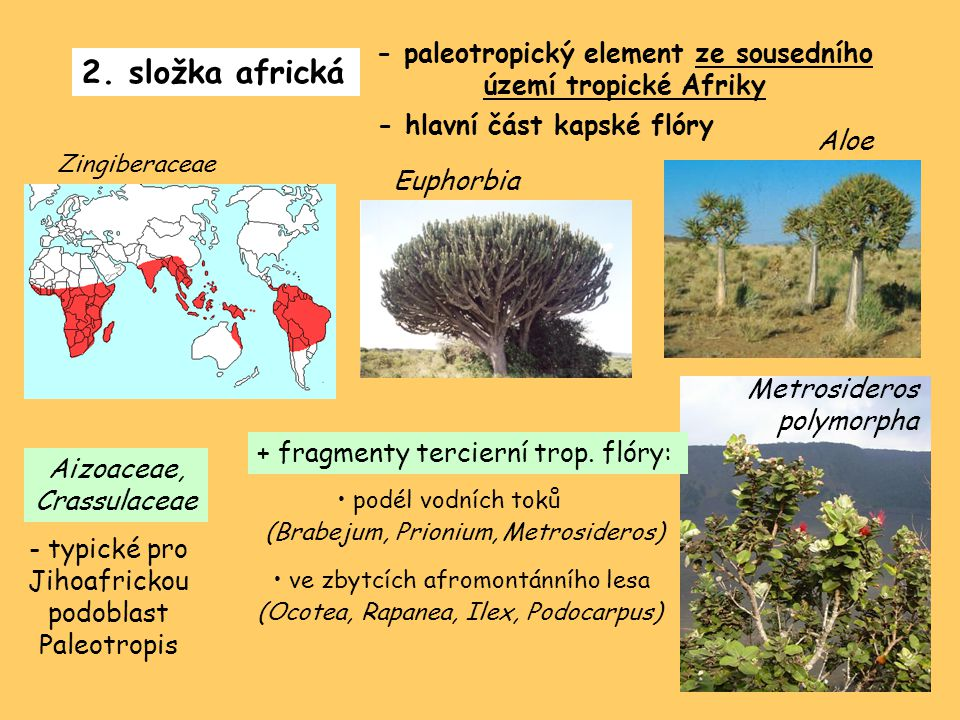 - paleotropický element ze sousedního území tropické Afriky