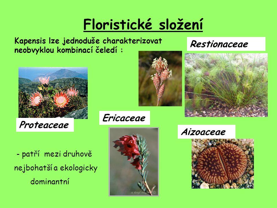 Floristické složení Restionaceae Ericaceae Proteaceae Aizoaceae