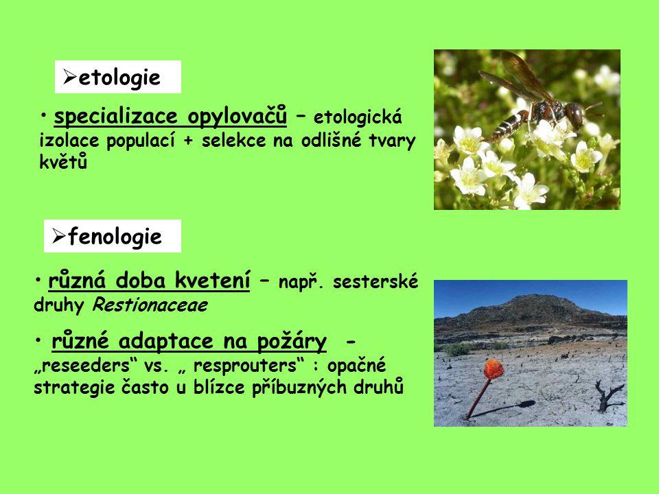etologie specializace opylovačů – etologická izolace populací + selekce na odlišné tvary květů. fenologie.