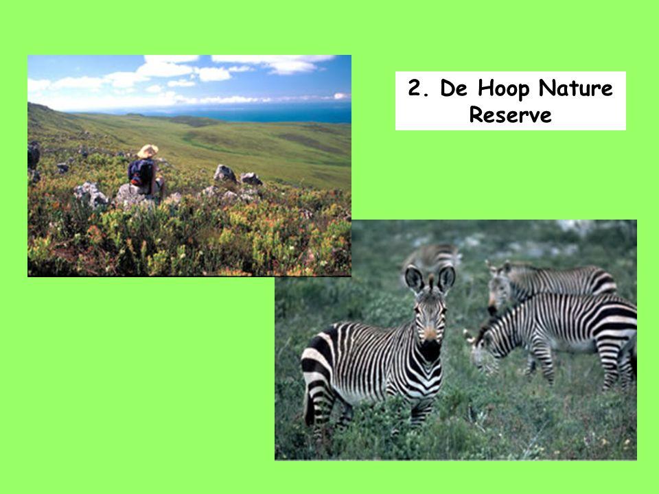 2. De Hoop Nature Reserve