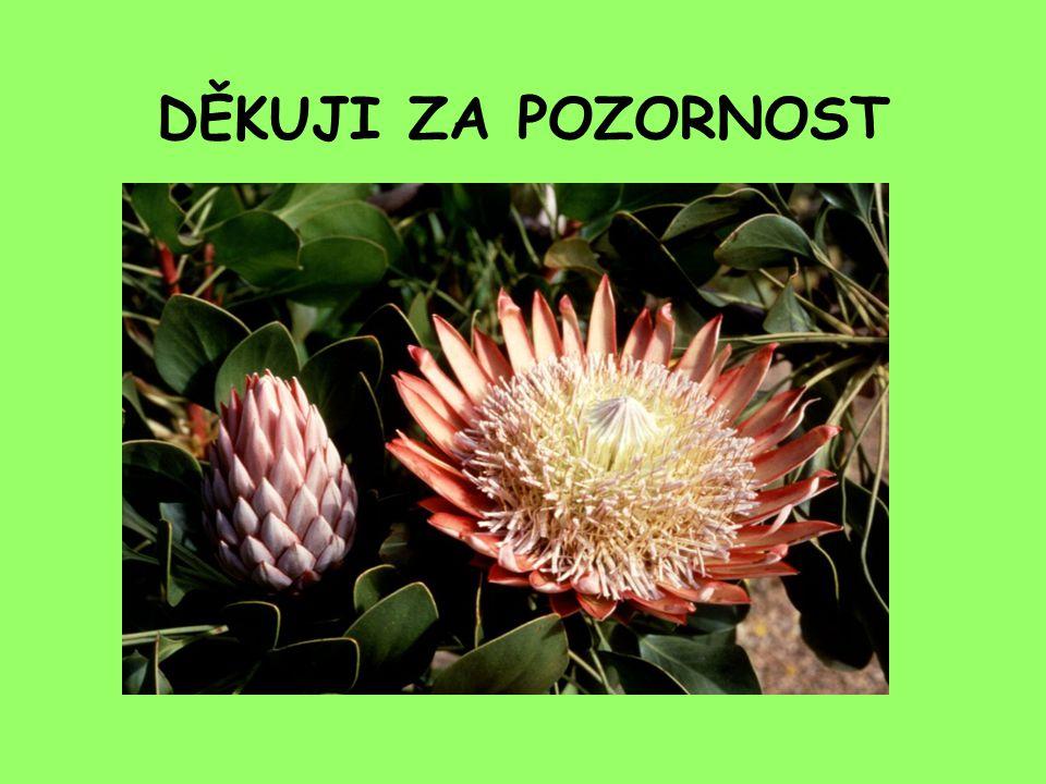DĚKUJI ZA POZORNOST Fotka : Protea cynaroides, národní rostlina JAR.