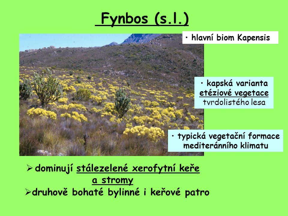 typická vegetační formace mediteránního klimatu