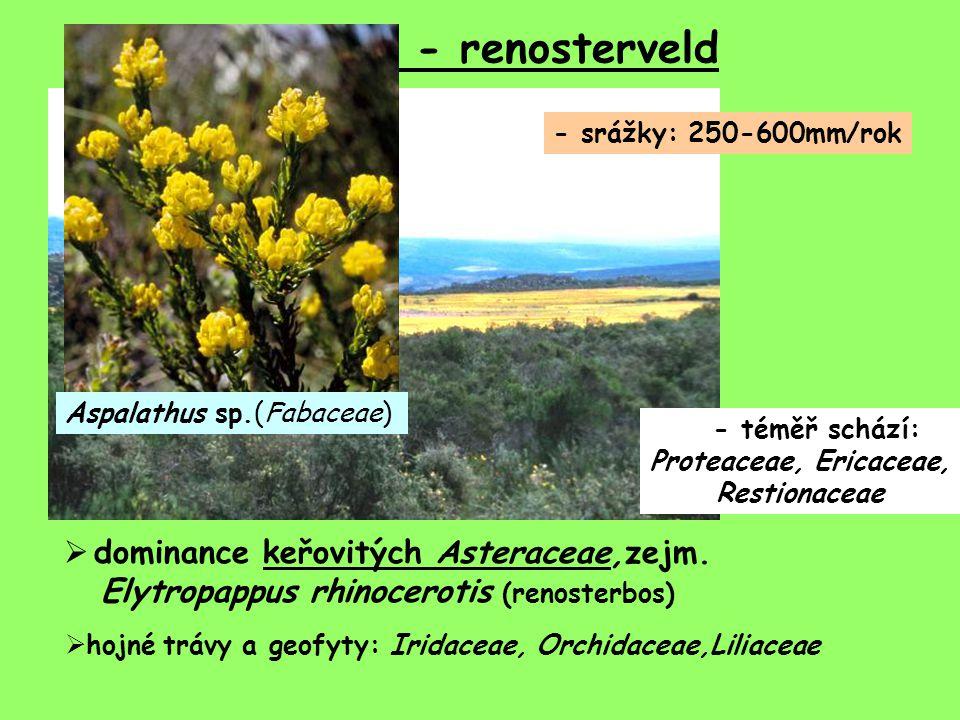 - téměř schází: Proteaceae, Ericaceae, Restionaceae