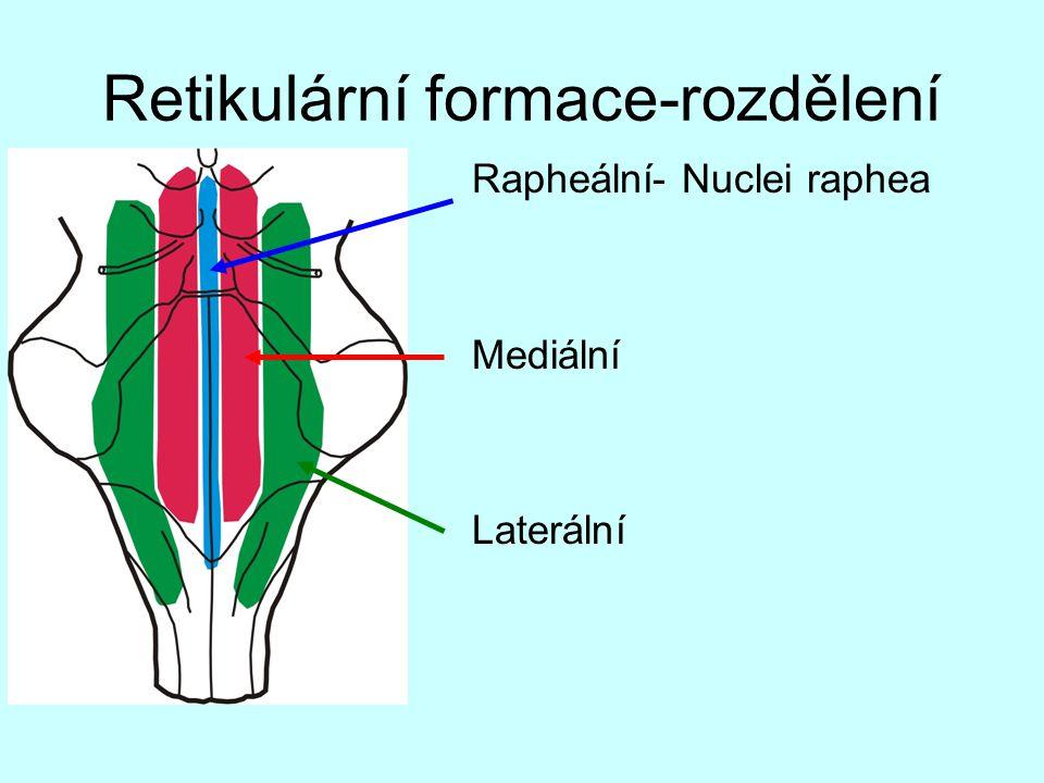 Retikulární formace-rozdělení