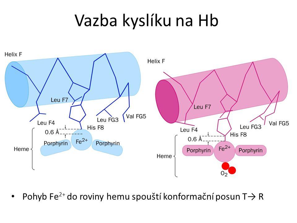 Vazba kyslíku na Hb Pohyb Fe2+ do roviny hemu spouští konformační posun T→ R