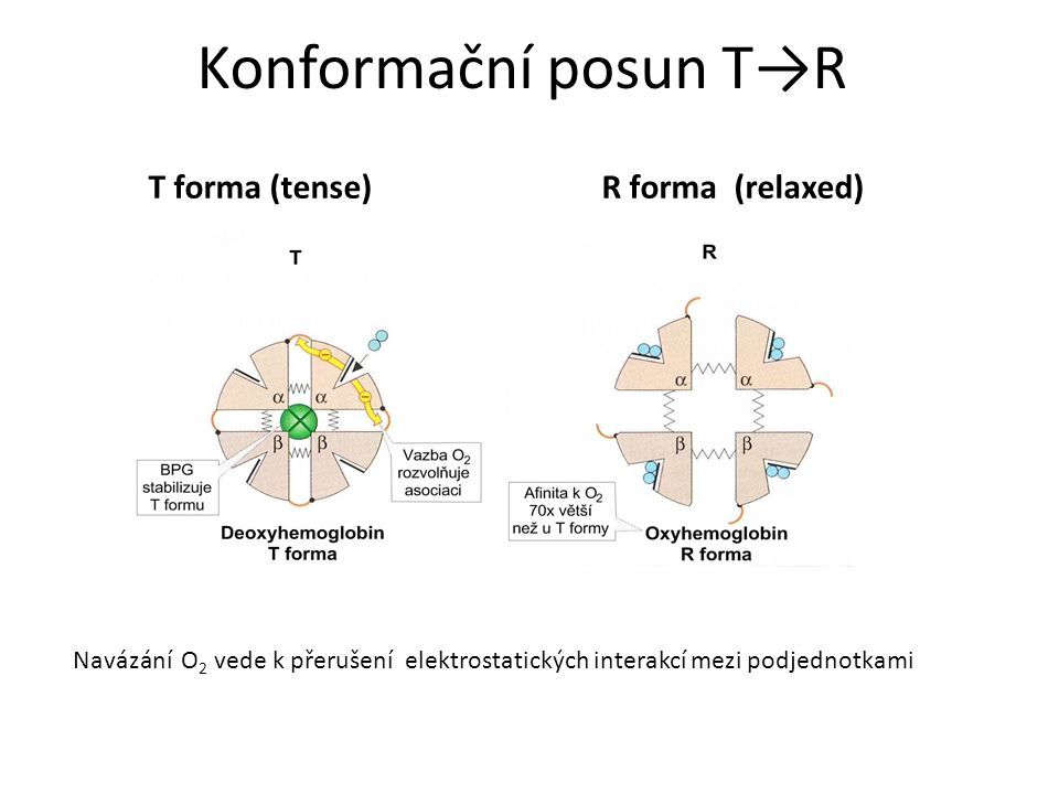 Konformační posun T→R T forma (tense) R forma (relaxed)