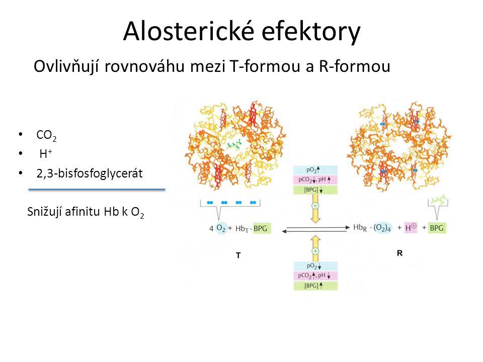 Alosterické efektory Ovlivňují rovnováhu mezi T-formou a R-formou CO2