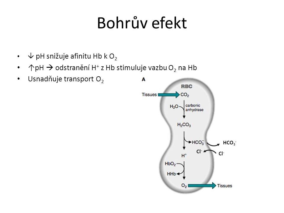 Bohrův efekt ↑pH  odstranění H+ z Hb stimuluje vazbu O2 na Hb