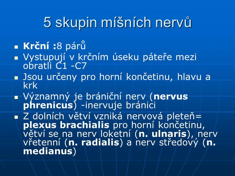 5 skupin míšních nervů Krční :8 párů