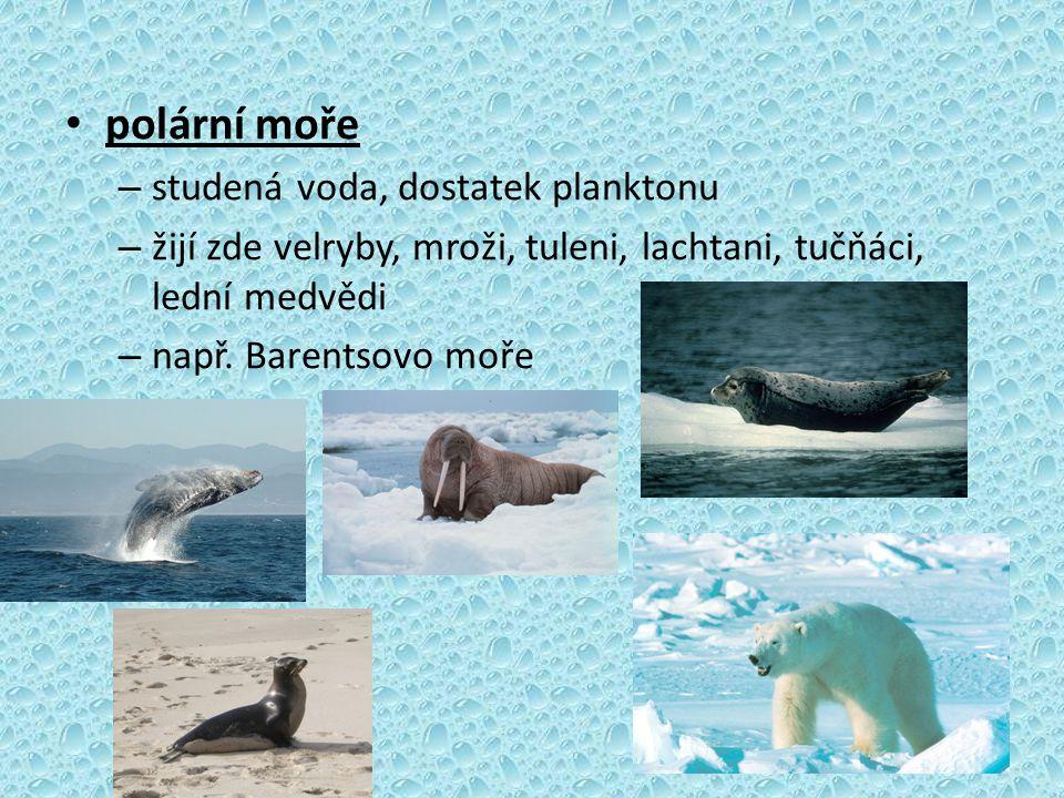 polární moře studená voda, dostatek planktonu