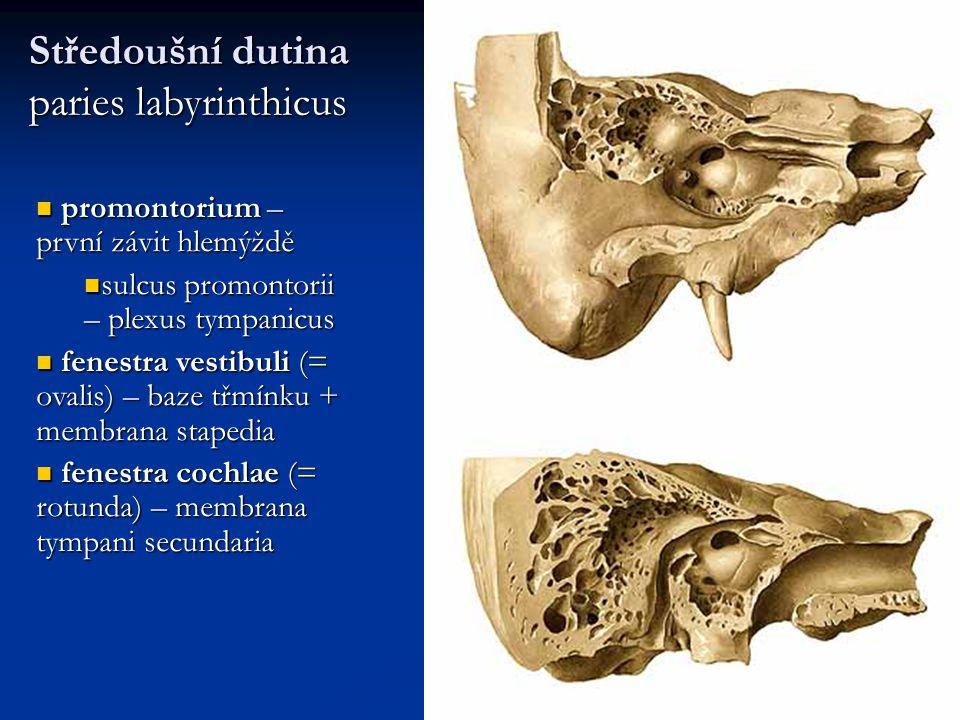 Středoušní dutina paries labyrinthicus