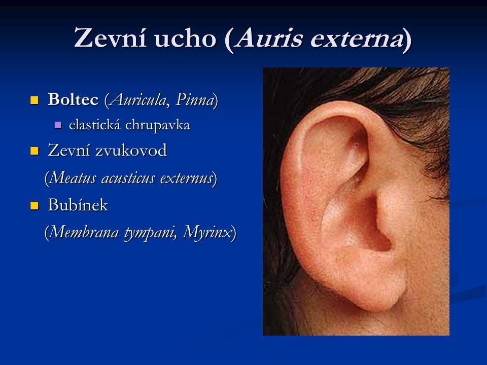 Zevní ucho (Auris externa)