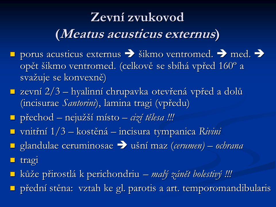 Zevní zvukovod (Meatus acusticus externus)