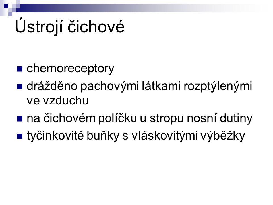 Ústrojí čichové chemoreceptory
