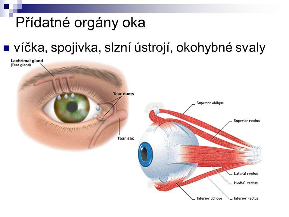 Přídatné orgány oka víčka, spojivka, slzní ústrojí, okohybné svaly