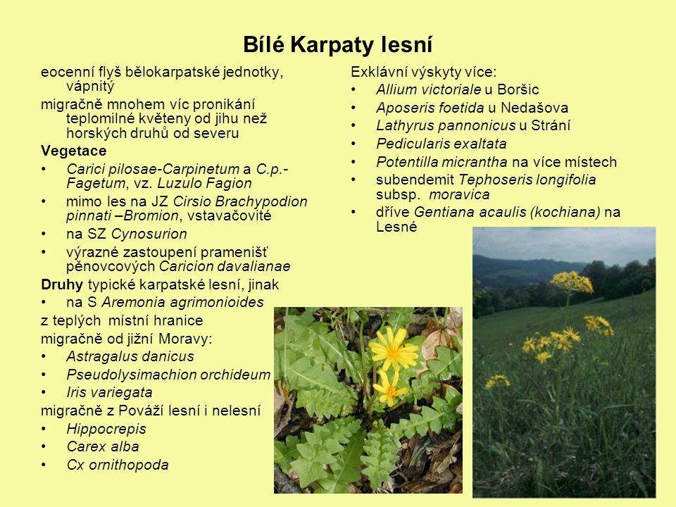 Bílé Karpaty lesní eocenní flyš bělokarpatské jednotky, vápnitý