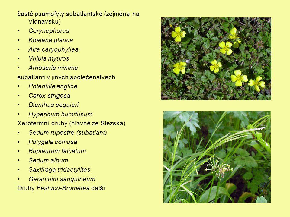 časté psamofyty subatlantské (zejména na Vidnavsku)