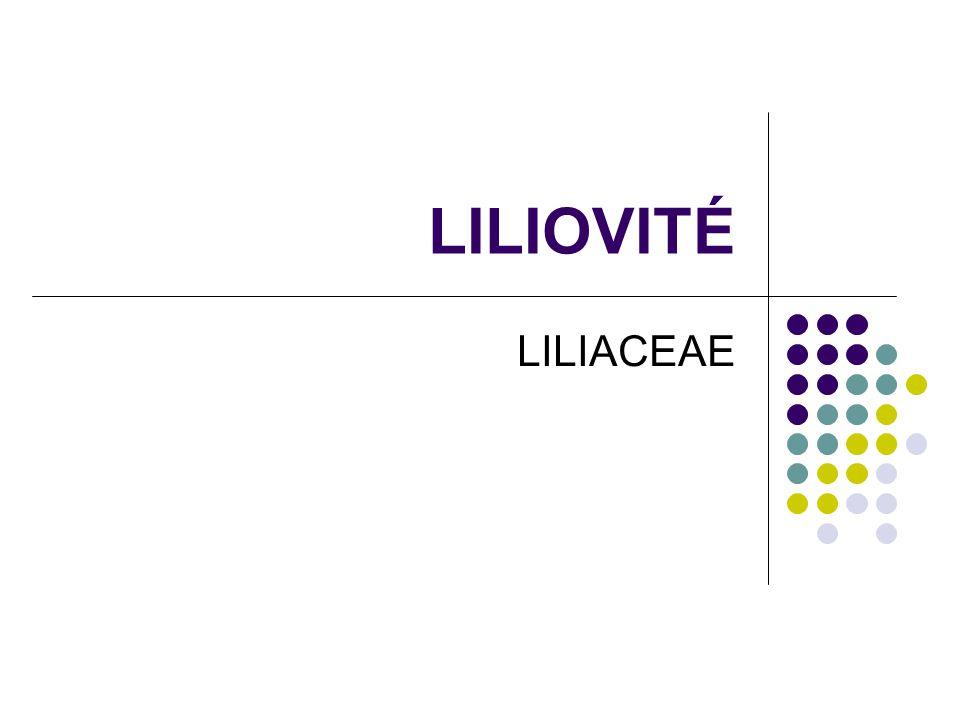 LILIOVITÉ LILIACEAE