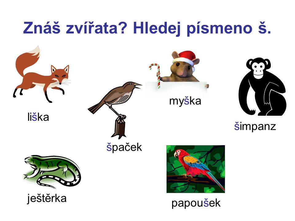 Znáš zvířata Hledej písmeno š.