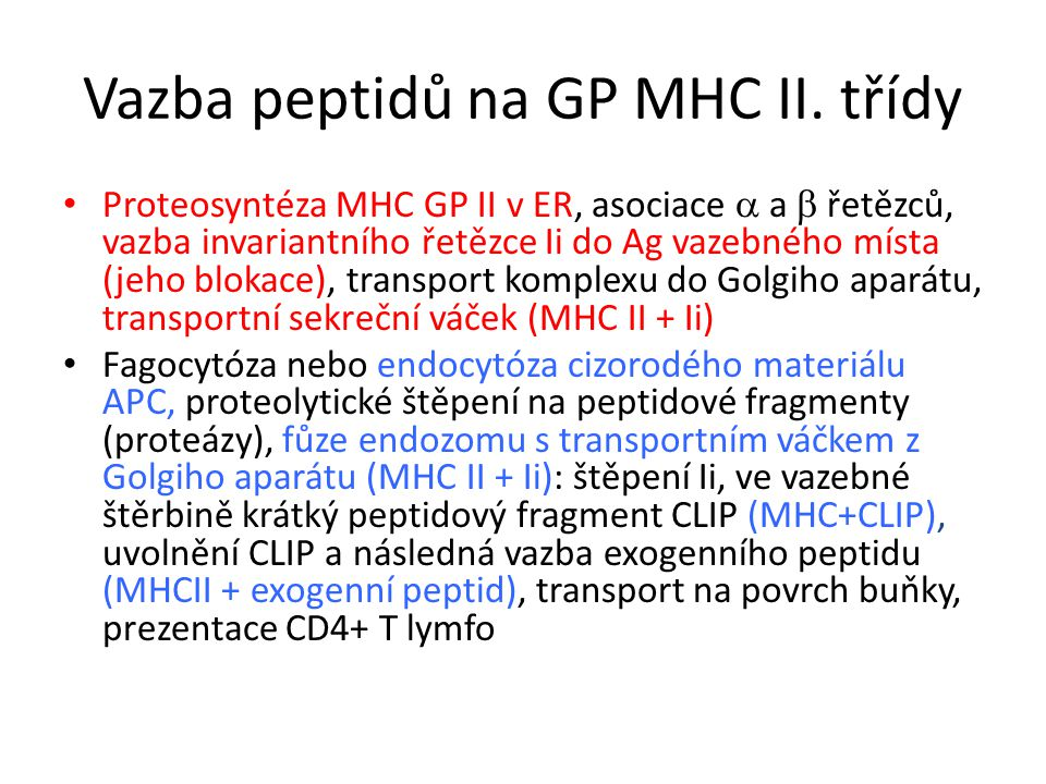 Vazba peptidů na GP MHC II. třídy