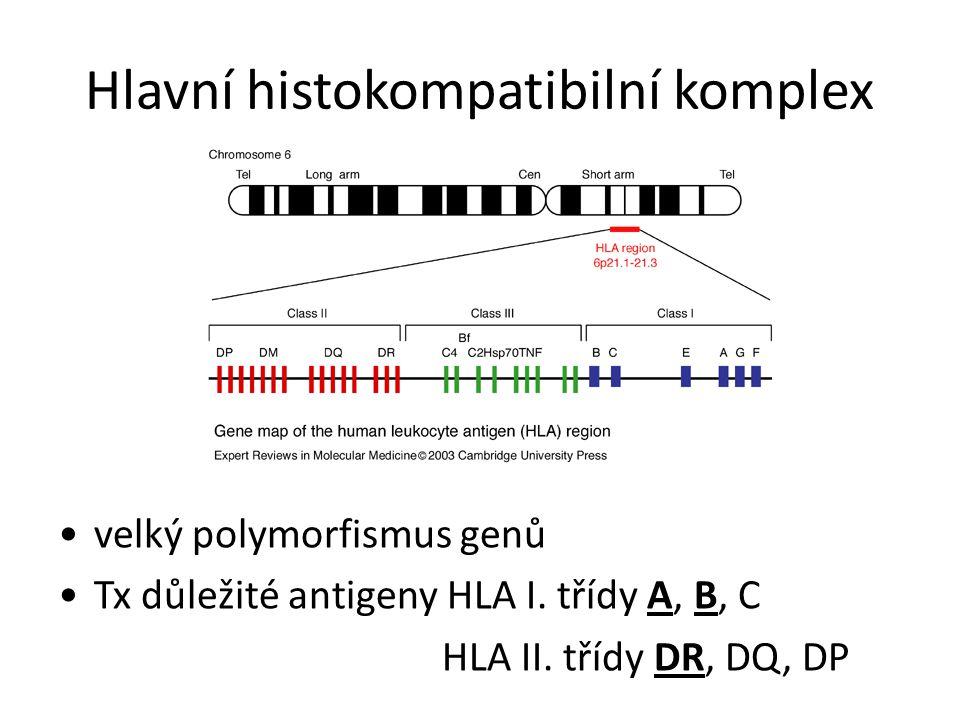 Hlavní histokompatibilní komplex