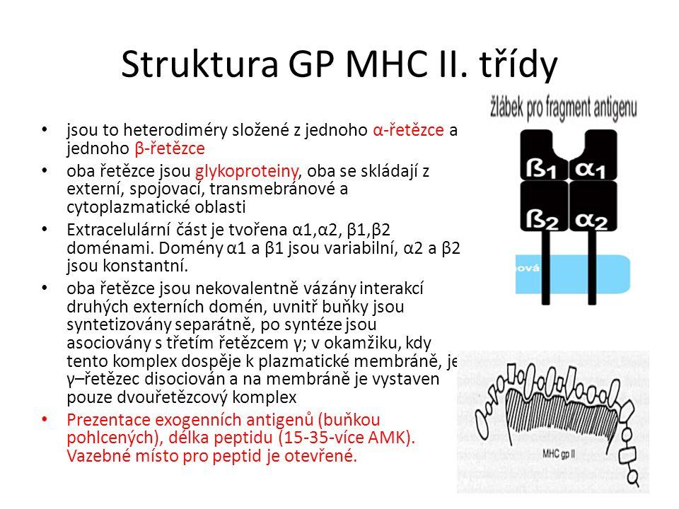 Struktura GP MHC II. třídy