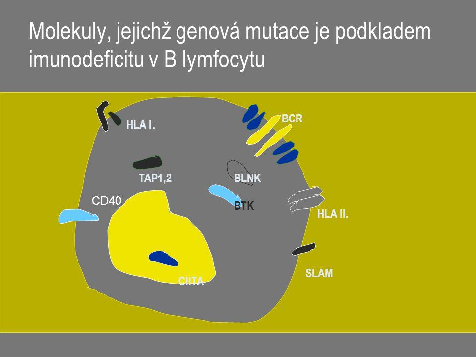 Molekuly, jejichž genová mutace je podkladem imunodeficitu v B lymfocytu