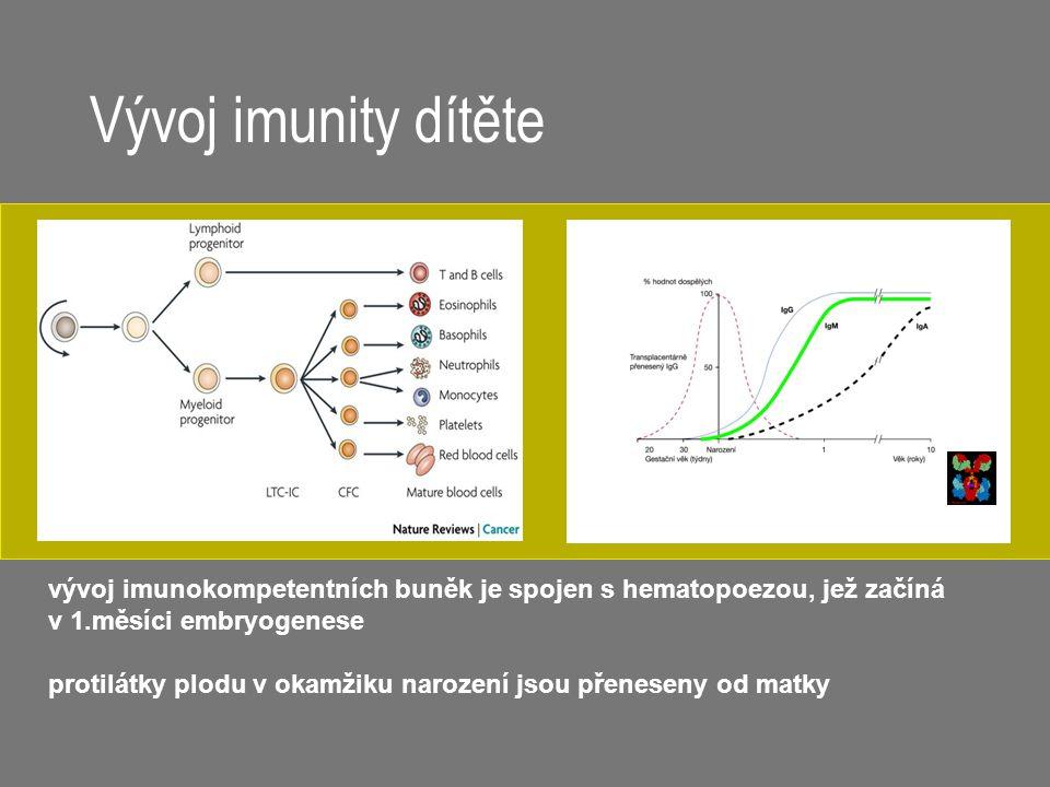 Vývoj imunity dítěte vývoj imunokompetentních buněk je spojen s hematopoezou, jež začíná. v 1.měsíci embryogenese.