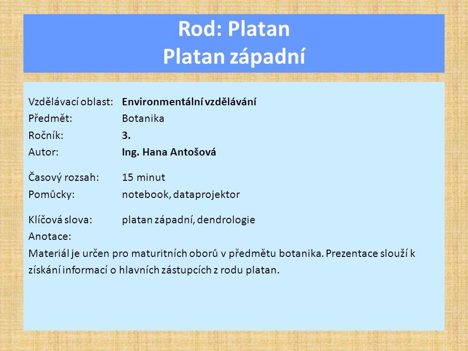 Rod: Platan Platan západní