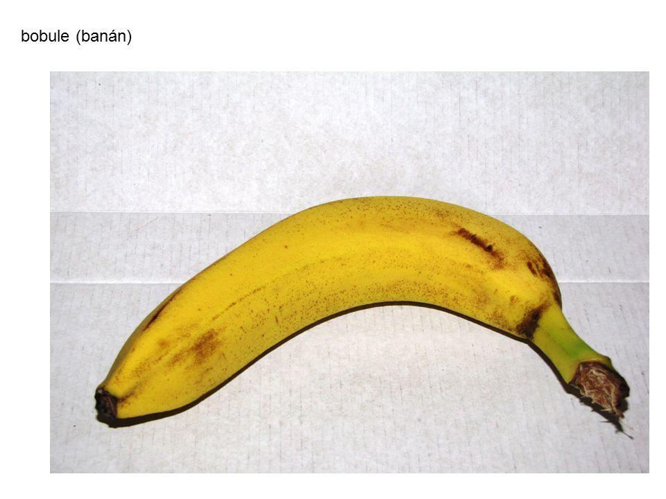bobule (banán) autor: Jan Marek