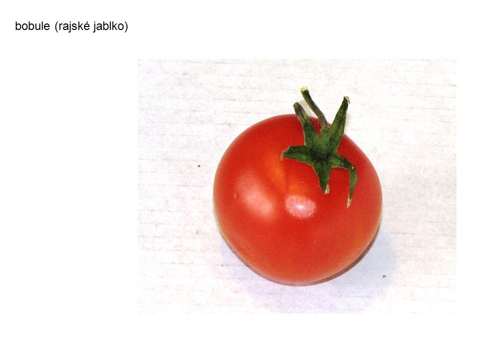 bobule (rajské jablko)