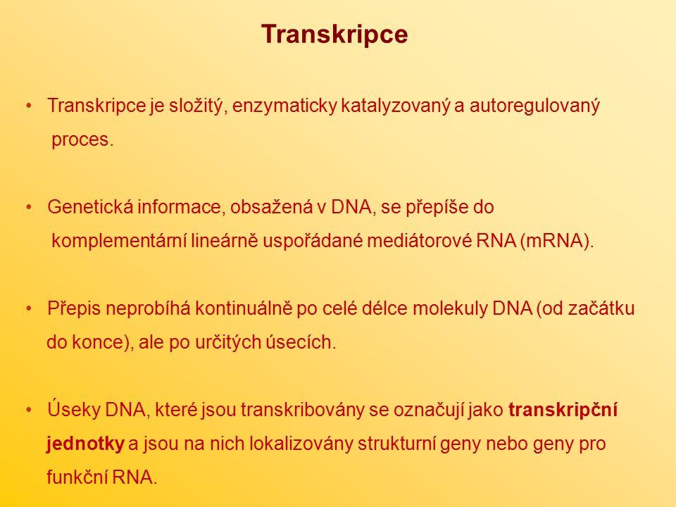 Transkripce Transkripce je složitý, enzymaticky katalyzovaný a autoregulovaný. proces. Genetická informace, obsažená v DNA, se přepíše do.