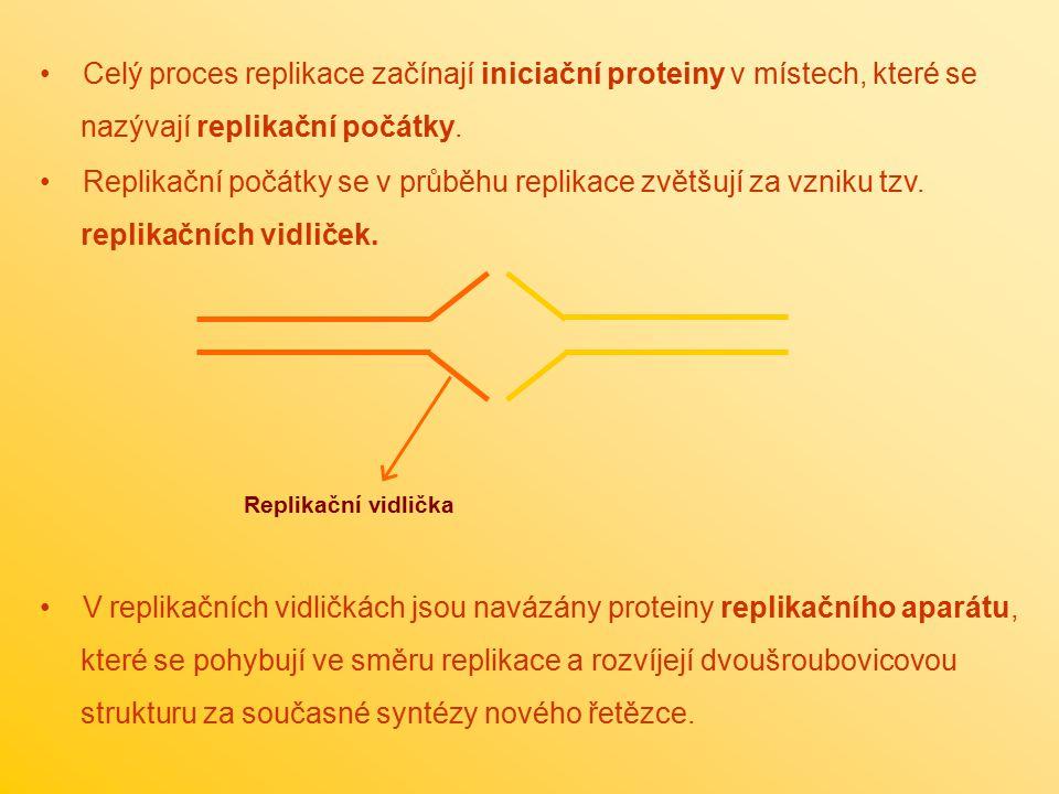 Celý proces replikace začínají iniciační proteiny v místech, které se